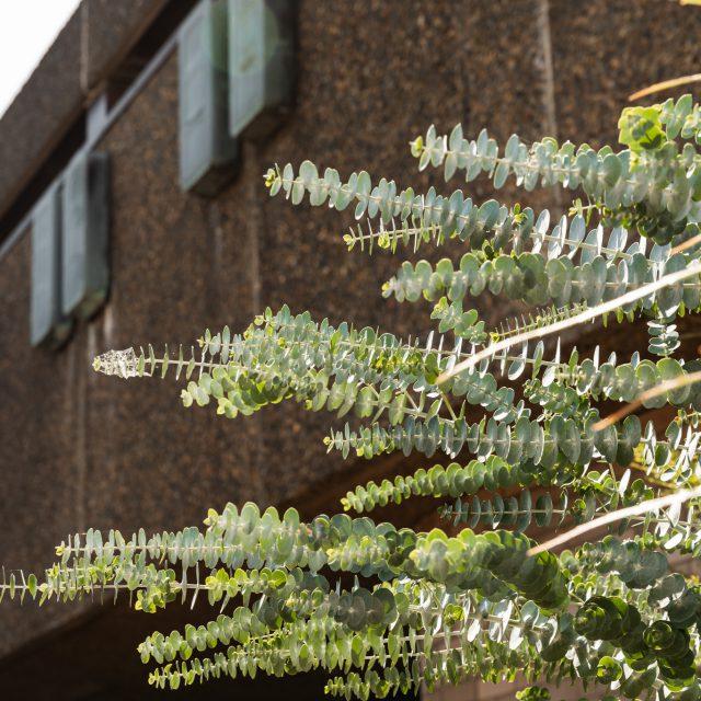 Sydney natives plant list